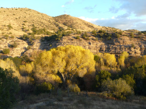 southwest New Mexico fall color