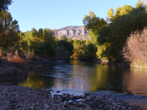 Gila River fall trees