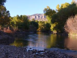 Gila River fall trees