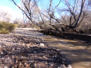 flooding creek in New Mexico