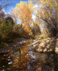 fall foliage near Silver City