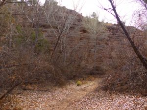 birdwatching in the gila wilderness