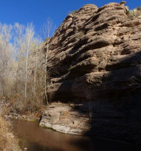birdwatching in southwest new mexico