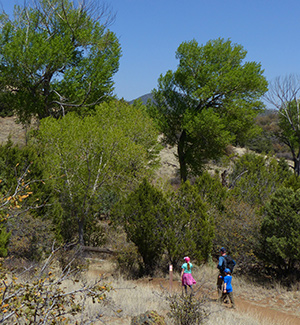 hiking the Gila in spring