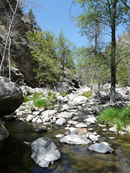 spring in the Gila