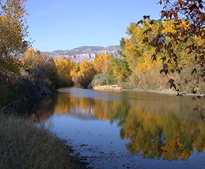 fall color on the Gila River